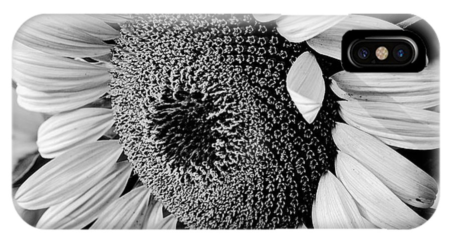 B&w IPhone X Case featuring the photograph Sunflower by Dan Wells