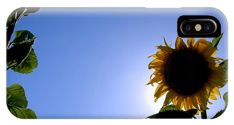 Sunflower IPhone X Case featuring the photograph Sunflower In The Sun by Eric Tressler