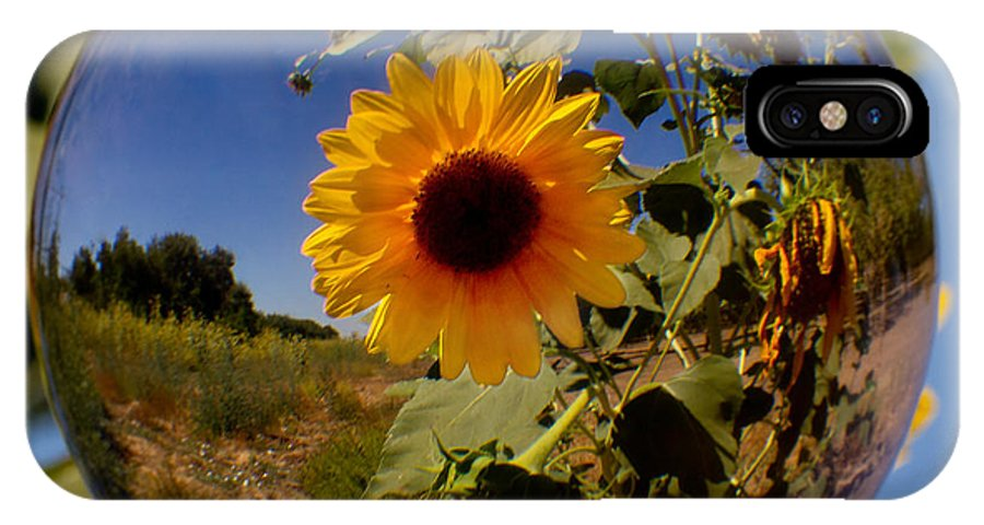 Sunflower IPhone X Case featuring the photograph Sunflower Through A Glass Eye by Robert Woodward
