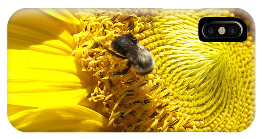 Natanson IPhone X Case featuring the photograph Sunflower With Bee by Steven Natanson