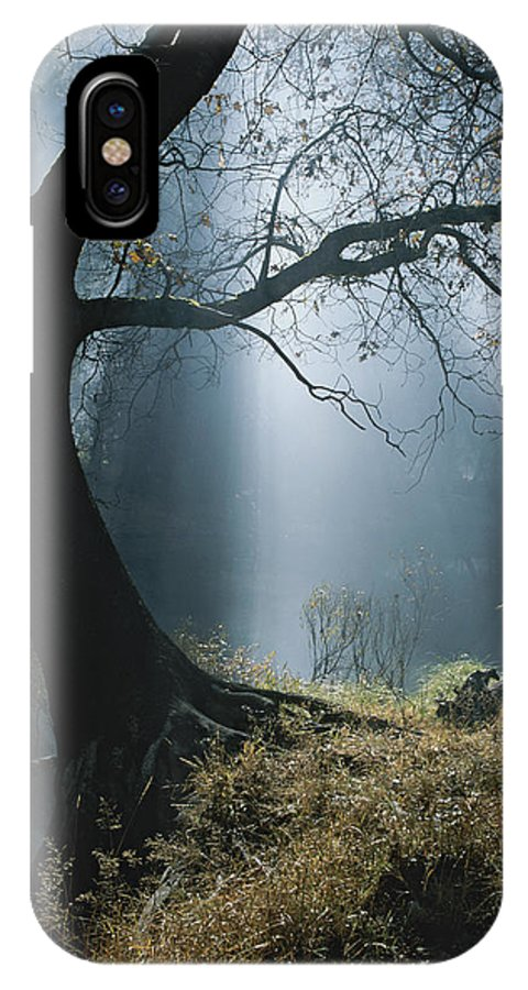 Natural Forces And Phenomena IPhone X / XS Case featuring the photograph Sunlight Beams Through The Treetops by Marc Moritsch