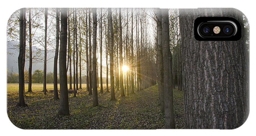 Field IPhone X Case featuring the photograph Sunlight In The Forest by Mats Silvan