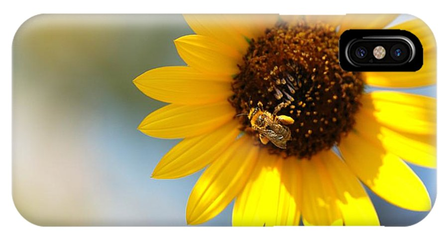 Sunflower IPhone X Case featuring the photograph Sunny by Constance Sanders
