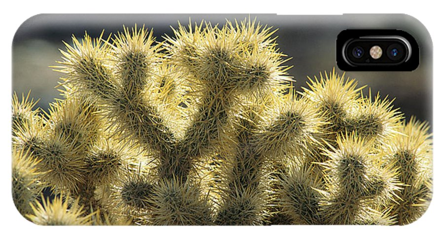 Plants IPhone X Case featuring the photograph Sunrise On Teddy Bear Cholla Optunia by Rich Reid