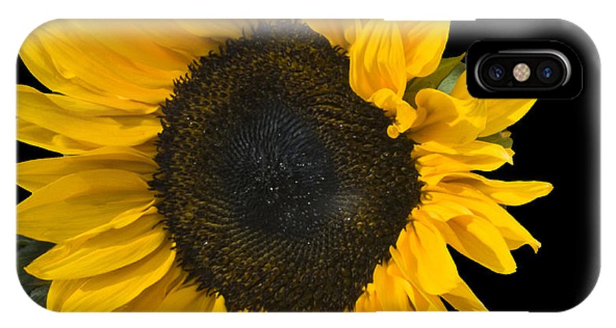 Flowers IPhone X Case featuring the photograph Sunshine In The Night by Sheila Laurens