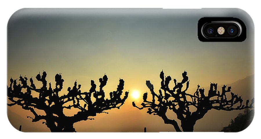 Tree IPhone X Case featuring the photograph Sunshine Over A Lake by Mats Silvan