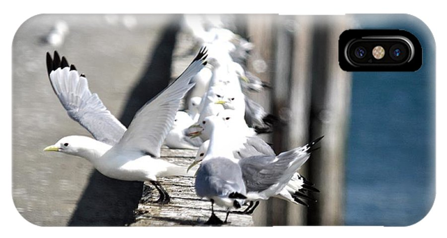 Seagulls IPhone X Case featuring the photograph Surrounded by Debra Miller