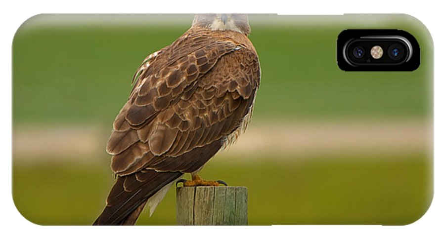 Swainson`s Hawk IPhone X Case featuring the photograph Swainsons Hawk by James Anderson