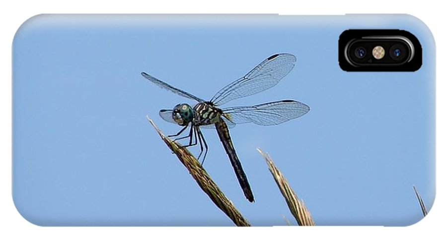 Dragonflies IPhone X / XS Case featuring the photograph Swamp Darner by Bruce W Krucke