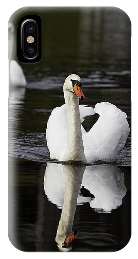 Bird IPhone X Case featuring the photograph Swan Pair by Rob Travis