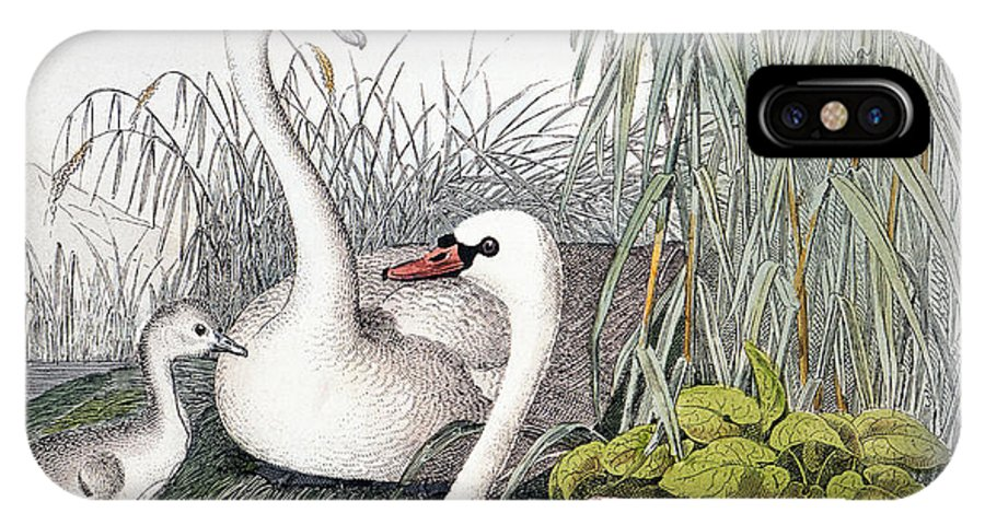 1850 IPhone X Case featuring the photograph Swans, C1850 by Granger