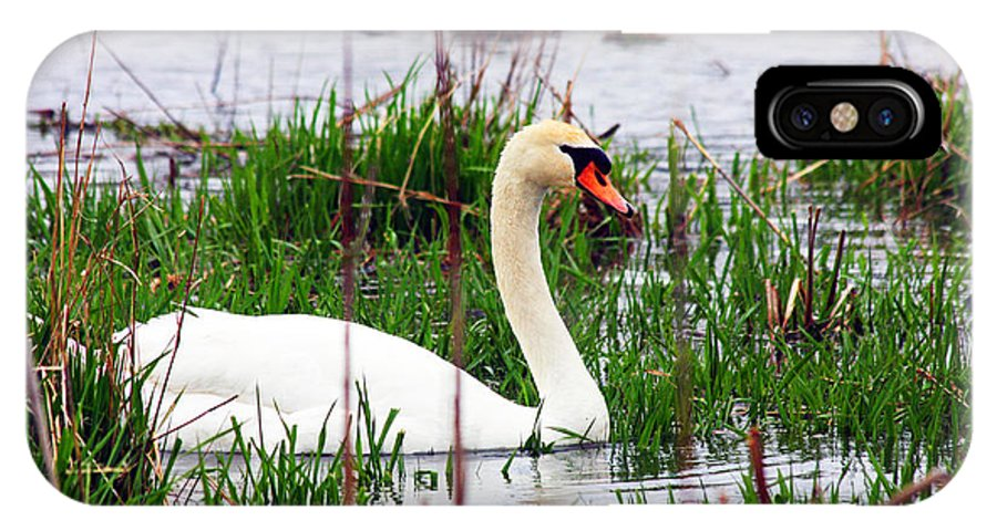 Swan IPhone X Case featuring the photograph Swan's Marsh by Marie Jamieson