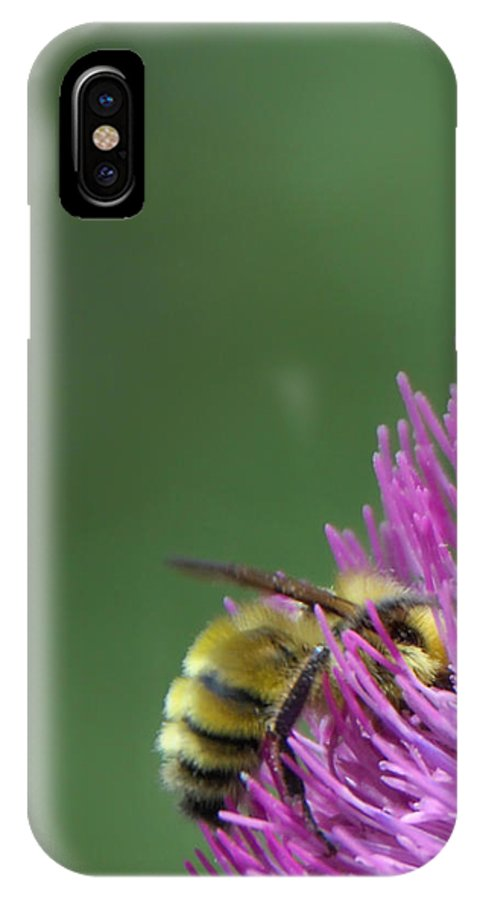 Bee IPhone X Case featuring the photograph Sweet Bee by Donna Blackhall