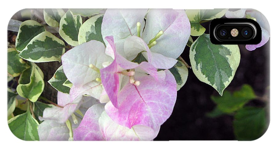 Bougainvillea IPhone X Case featuring the photograph Sweet Bougy by Debi Singer