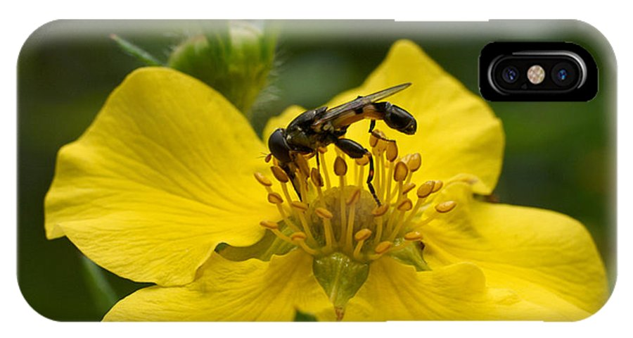 Hoverfly IPhone X Case featuring the photograph Syritta Pipiens by Jouko Lehto