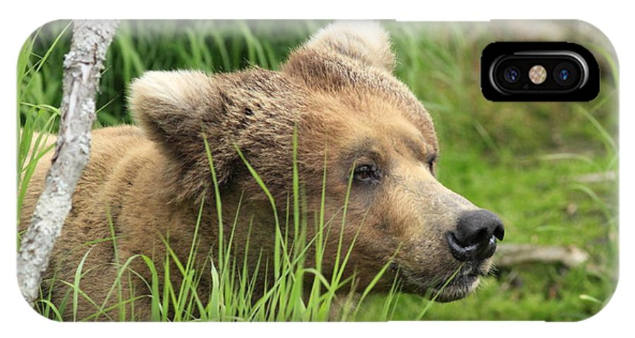 Alaskan Brown Bear IPhone X Case featuring the photograph Taking A Peek by Gord Patterson