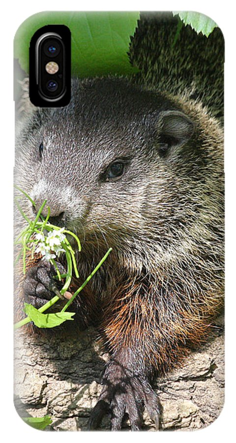 Woodchuck IPhone X Case featuring the photograph Taking Time To Smell The Flowers by Doris Potter