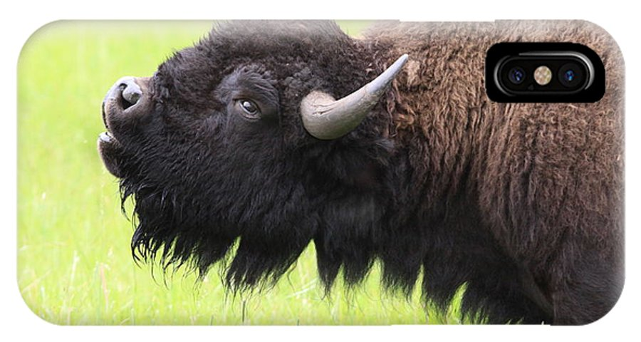 Buffalo IPhone X Case featuring the photograph Tatanka by Kate Purdy