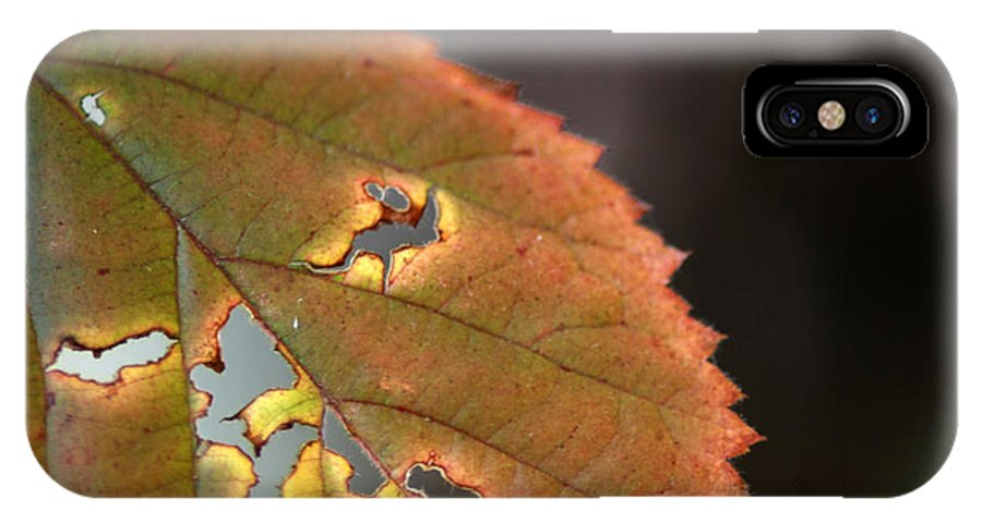 Fall Leaf IPhone X Case featuring the photograph Tattered Leaf by Optical Playground By MP Ray