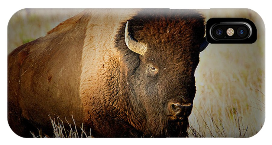 Bull IPhone X Case featuring the photograph Taurus by Douglas Barnard