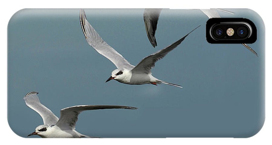 Tern IPhone X Case featuring the photograph Terns In Formation by Dave Mills