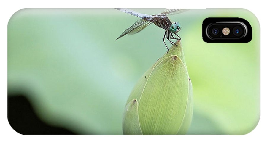 Blue Dasher Dragonfly IPhone X Case featuring the photograph Territorial by Katherine White