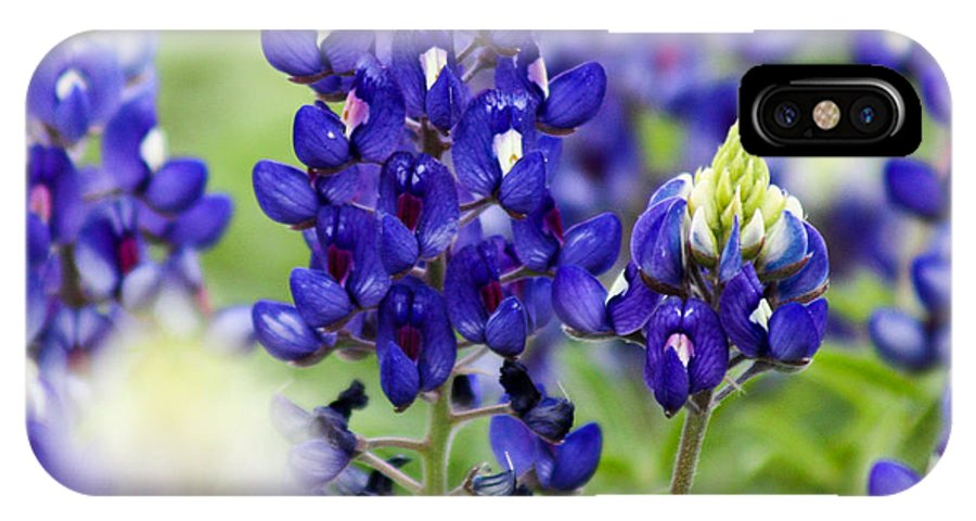 Flowers IPhone X Case featuring the photograph Texas Bluebonnets by Toma Caul