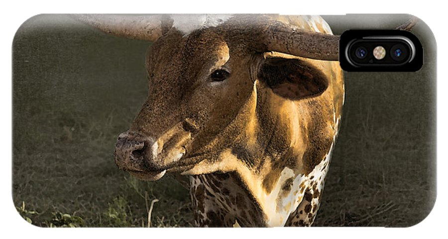 Texas Longhorn IPhone X Case featuring the photograph Texas Longhorn # 4 by Betty LaRue