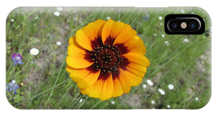 Landscape IPhone X Case featuring the photograph Texas Wildflower by Sandra Vasko