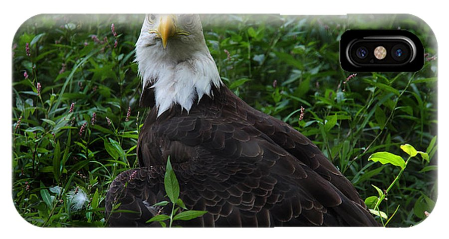 Lee Dos Santos IPhone X Case featuring the photograph The American Bald Eagle Iv by Lee Dos Santos