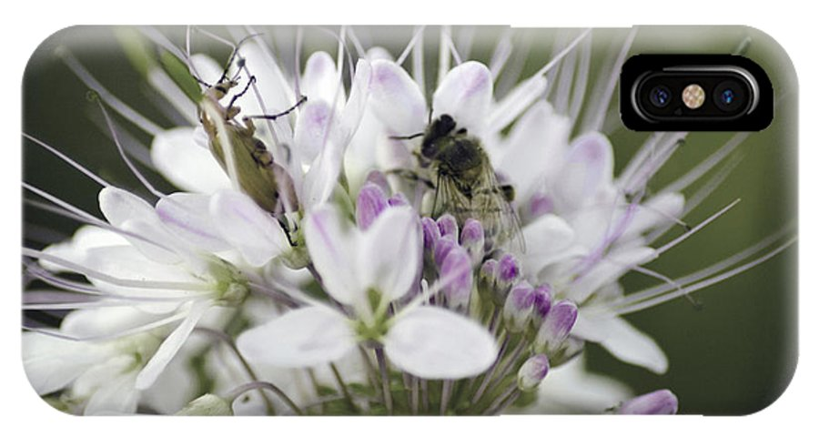 Bees IPhone X / XS Case featuring the photograph The Beetle And The Bee by Donna Greene