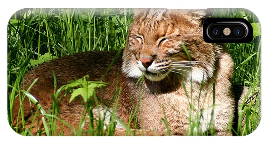 Lynx Rufus IPhone X Case featuring the photograph The Bobcat's Afternoon Nap by Laurel Talabere
