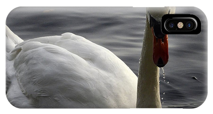 Swan IPhone X Case featuring the photograph The Bold Approach by Bob Christopher