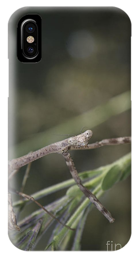 Larva IPhone X Case featuring the photograph The Boss Lady by Jack Norton