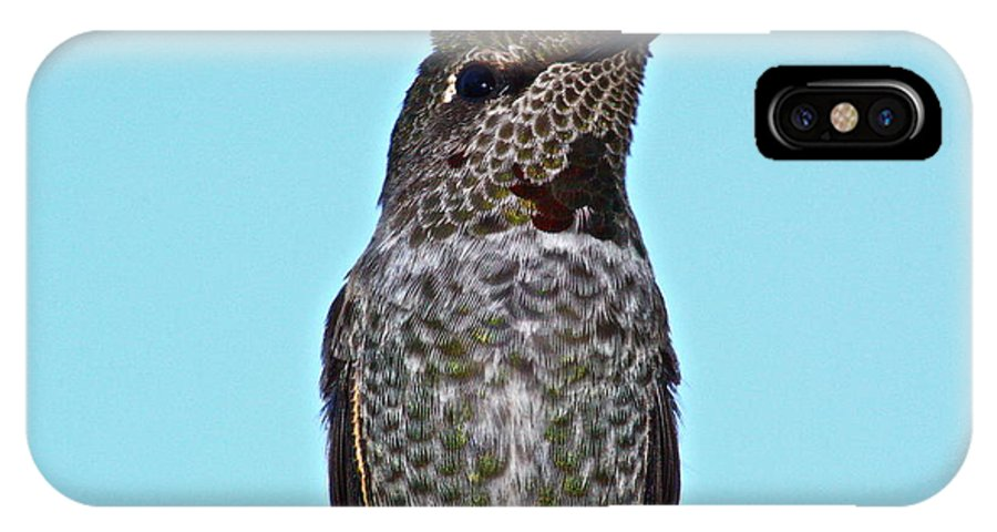 Birds IPhone X Case featuring the photograph The Bully by Diana Hatcher