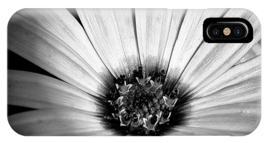Daisy IPhone X Case featuring the photograph The Daisy II by David Patterson
