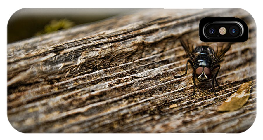 Flies IPhone X Case featuring the photograph The Fly by Heather Applegate