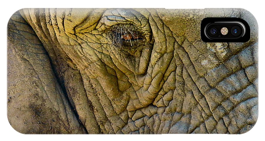 Elephant IPhone X Case featuring the photograph The Great by Art Dingo