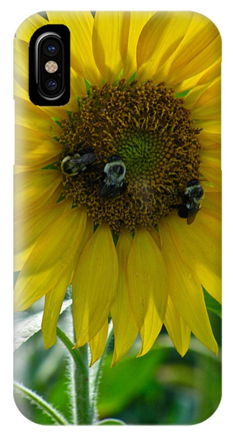 The Honey Collectors IPhone X Case featuring the photograph The Honey Collectors by Debra   Vatalaro