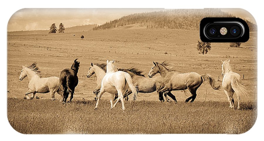 Herd Of Horses IPhone X Case featuring the photograph The Horse Herd by Steve McKinzie