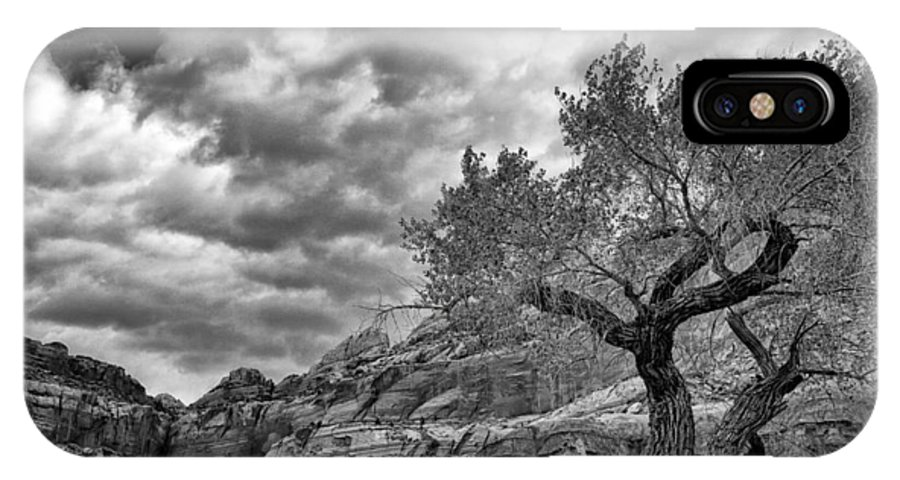 Black White IPhone X Case featuring the photograph The Light On The Cottonwood Bw by Mitch Johanson