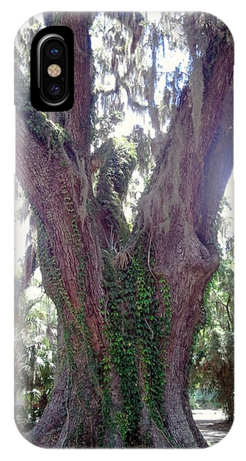 Lanscape IPhone X Case featuring the photograph The Mighty Oak by Cheryl Matthew