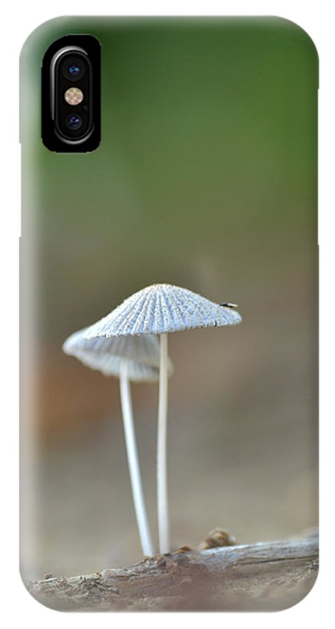 Mushroom IPhone X Case featuring the photograph The Mushrooms by JD Grimes