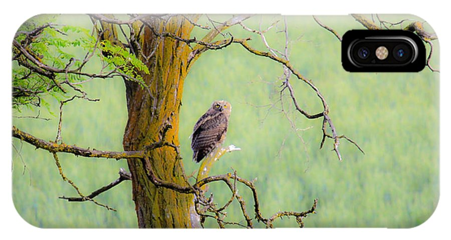 Horned Owl IPhone X Case featuring the photograph The Owls Overlook by Steve McKinzie