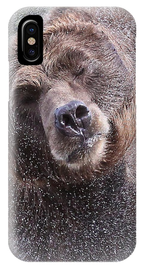 Grizzly Bear IPhone X Case featuring the photograph The Spin Cycle by Athena Mckinzie