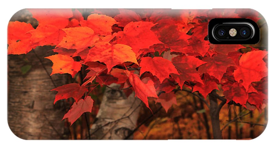 Autumn IPhone X Case featuring the photograph The True Beauty Of Autumn by Marjorie Imbeau