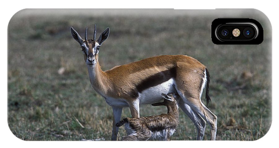 Sandra Bronstein IPhone X Case featuring the photograph Thomson Gazelle And Newborn Calf by Sandra Bronstein