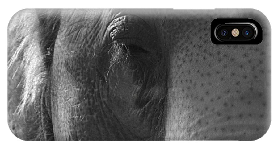 Pachyderm IPhone X Case featuring the photograph Thoughts Of The Elephant by Maggy Marsh