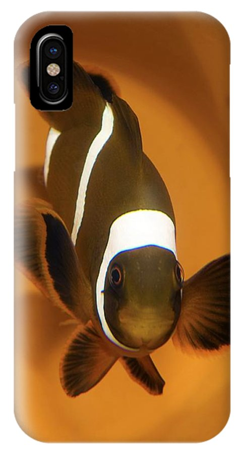 Three-band Anemone Fish IPhone X Case featuring the photograph Three-band Anemonefish by Photostock-israel