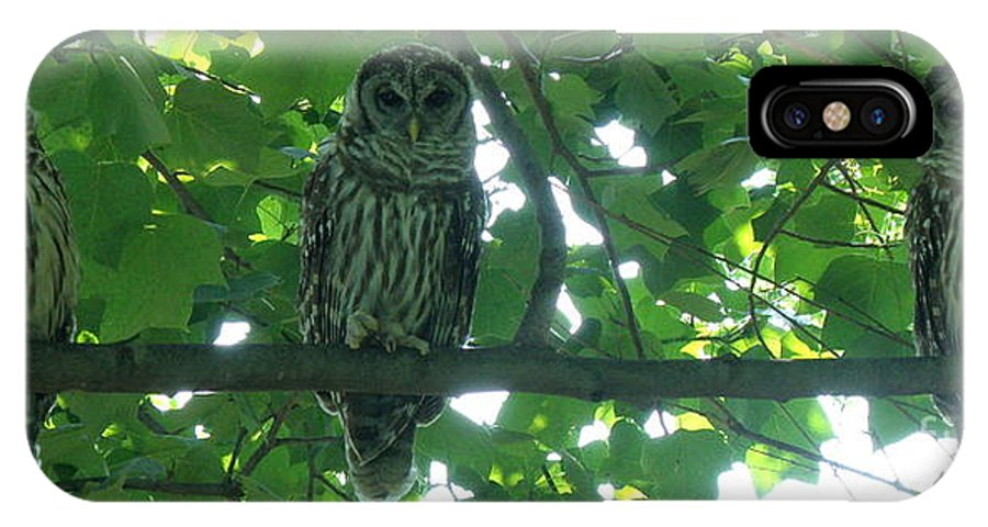 Owls IPhone X Case featuring the photograph Three Barred Owls by Lainie Wrightson